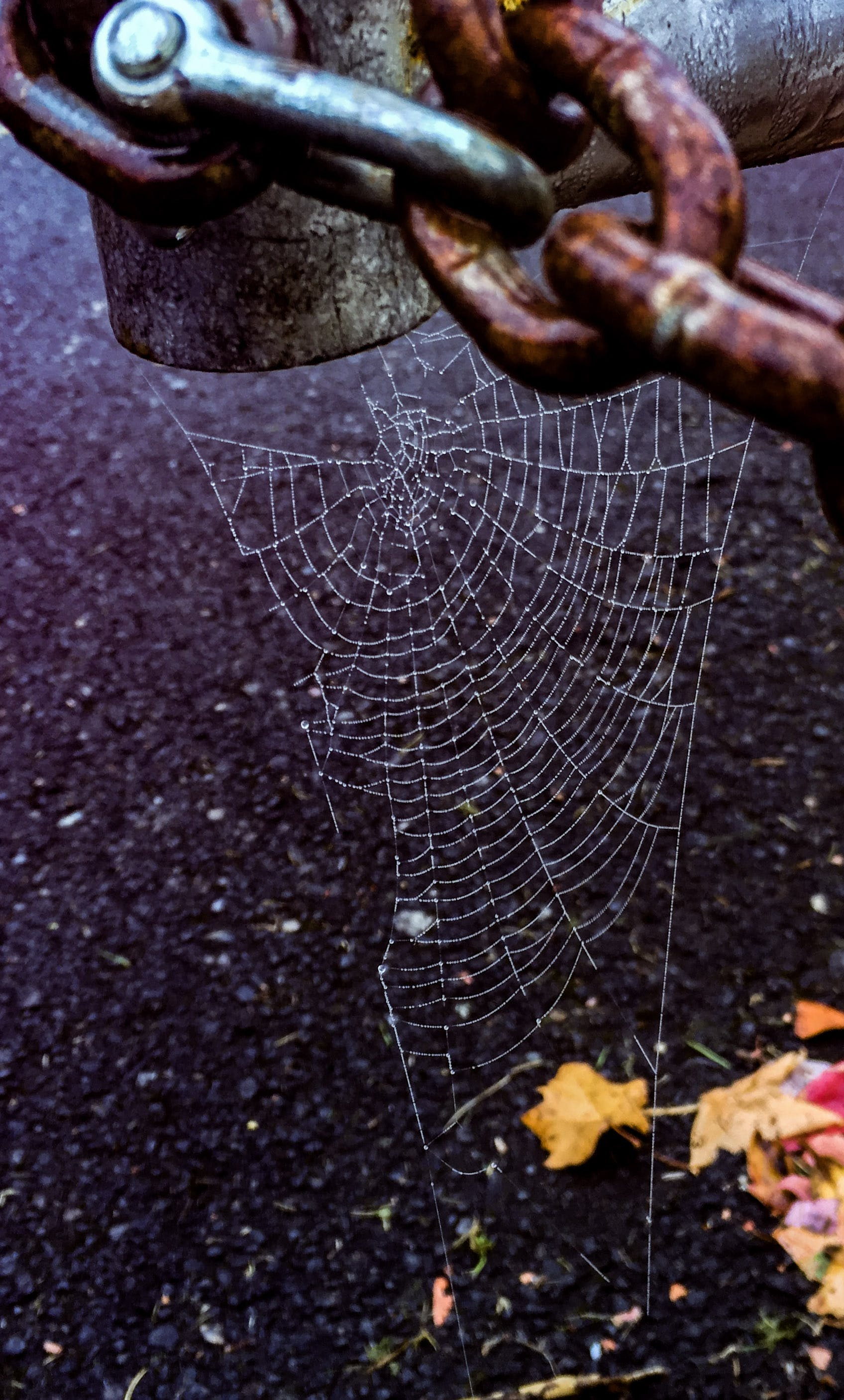 Spider Web Hanging on Chain