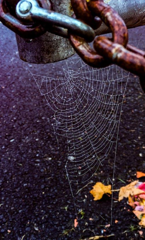 Δωρεάν στοκ φωτογραφιών με web, αγροτικός, αλυσίδα, αράχνη