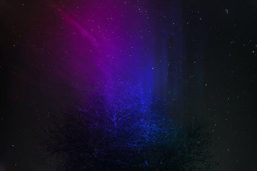 Ilmainen kuvapankkikuva tunnisteilla kaltevuus, laser, pitkä valotusaika, puu