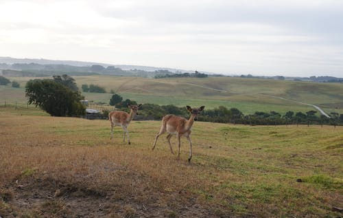 Free stock photo of animals, countryside, deer
