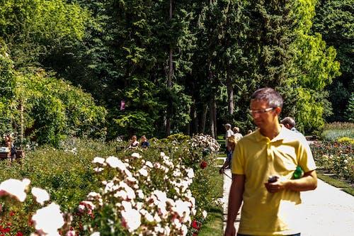 Безкоштовне стокове фото на тему «ogrod, szczecin, дерева, люди»