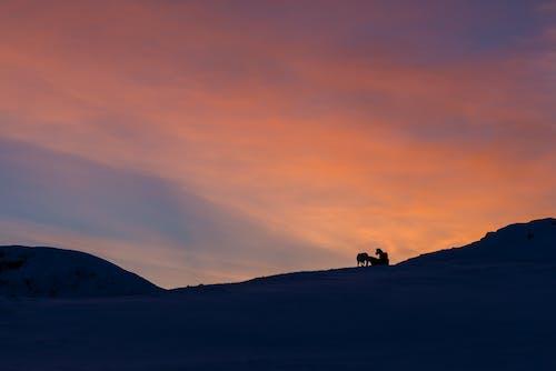 Photos gratuites de à contre-jour, aube, coucher de soleil