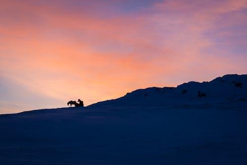 Photos gratuites de à contre-jour, aube, colline