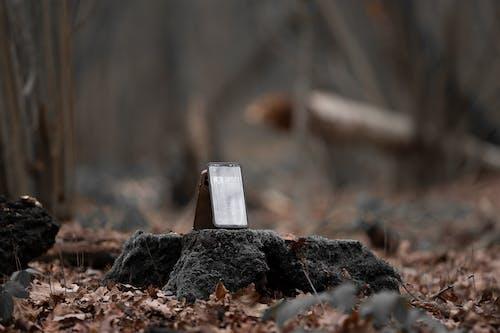 Základová fotografie zdarma na téma chytrý telefon, divočina, divoký