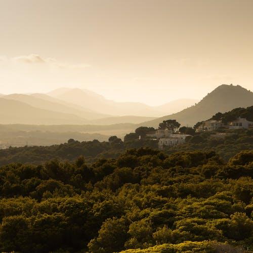 Fotos de stock gratuitas de arboles, bosque, cerros
