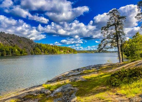 Foto profissional grátis de Escandinávia, Estocolmo, floresta