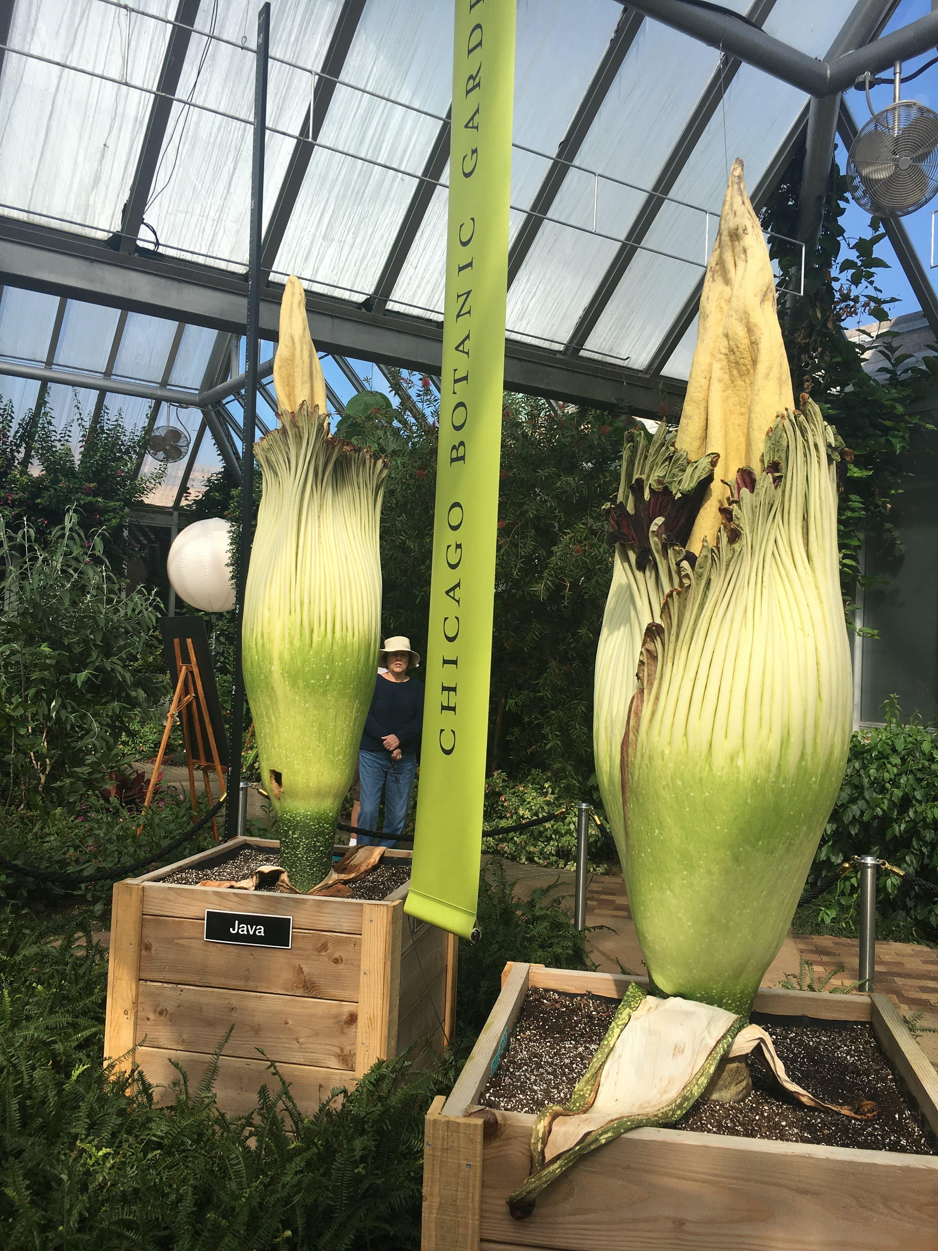 Kostenloses Stock Foto zu leiche blumen chicago botanischer garten