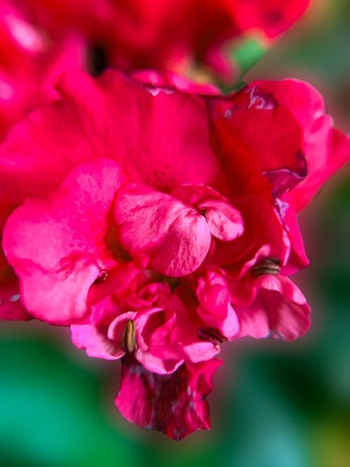 Close-Up Shot Pink Flowers