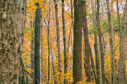 Fotobanka sbezplatnými fotkami na tému denné svetlo, idylický, jasný, kmene stromov