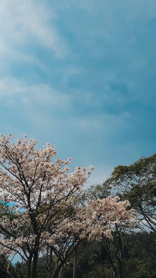 Foto profissional grátis de árvore, céu, flor