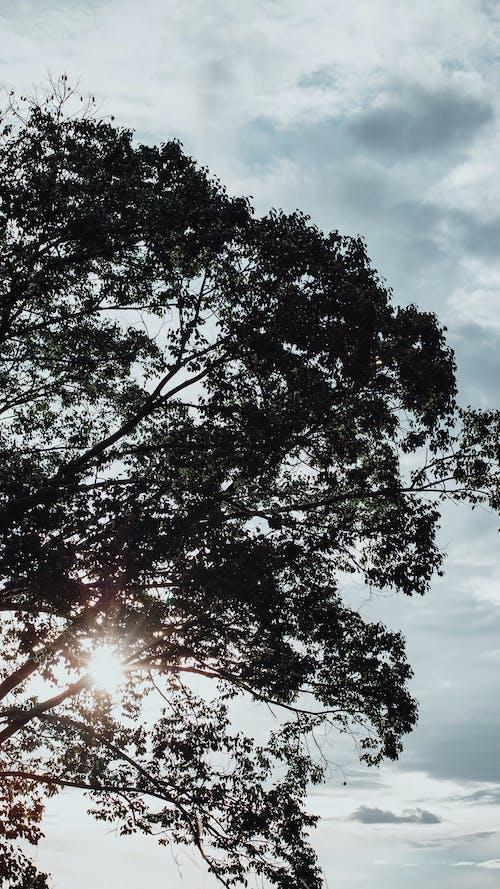 Foto profissional grátis de ao ar livre, árvore, campo