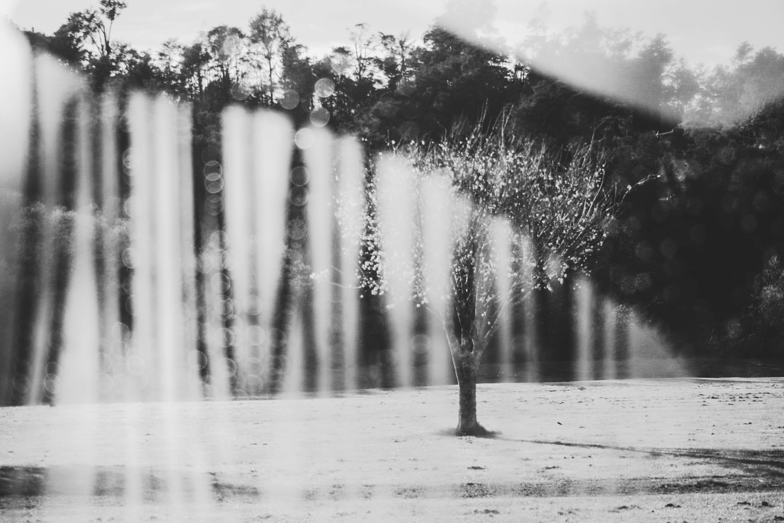 Grayscale Photography of a Tree