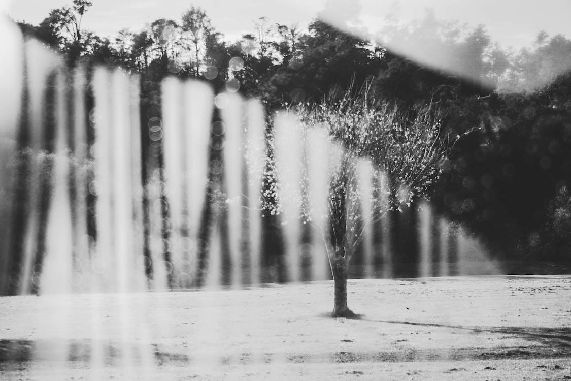 ağaçlar, bardak, bulanıklık