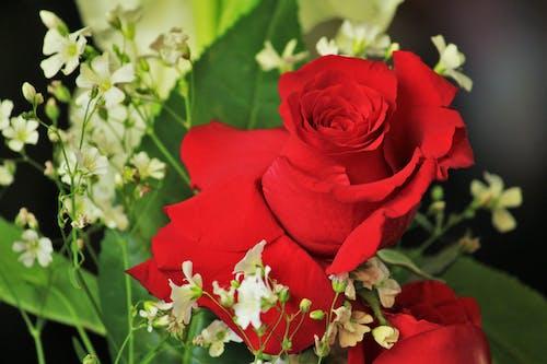 60d, 교회, 꽃, 빨간의 무료 스톡 사진