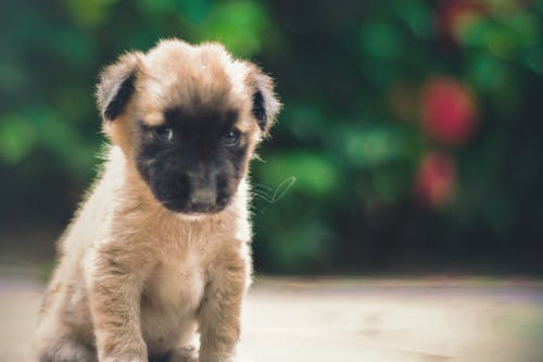 Free stock photo of animals, brown, close-up, cute