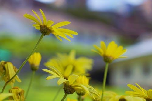 Základová fotografie zdarma na téma 60d, canon, krásné květiny, květina žlutá