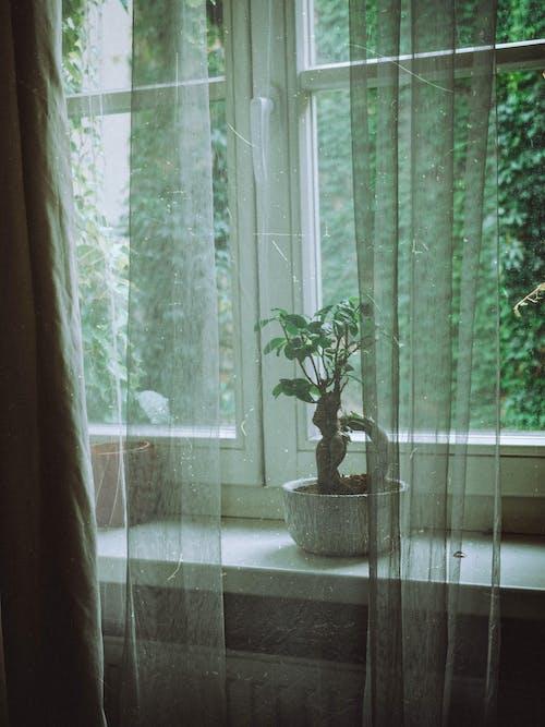 Potted Bonsai tree placed on windowsill