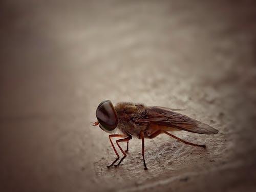 Free stock photo of cholera, closeup, house flies