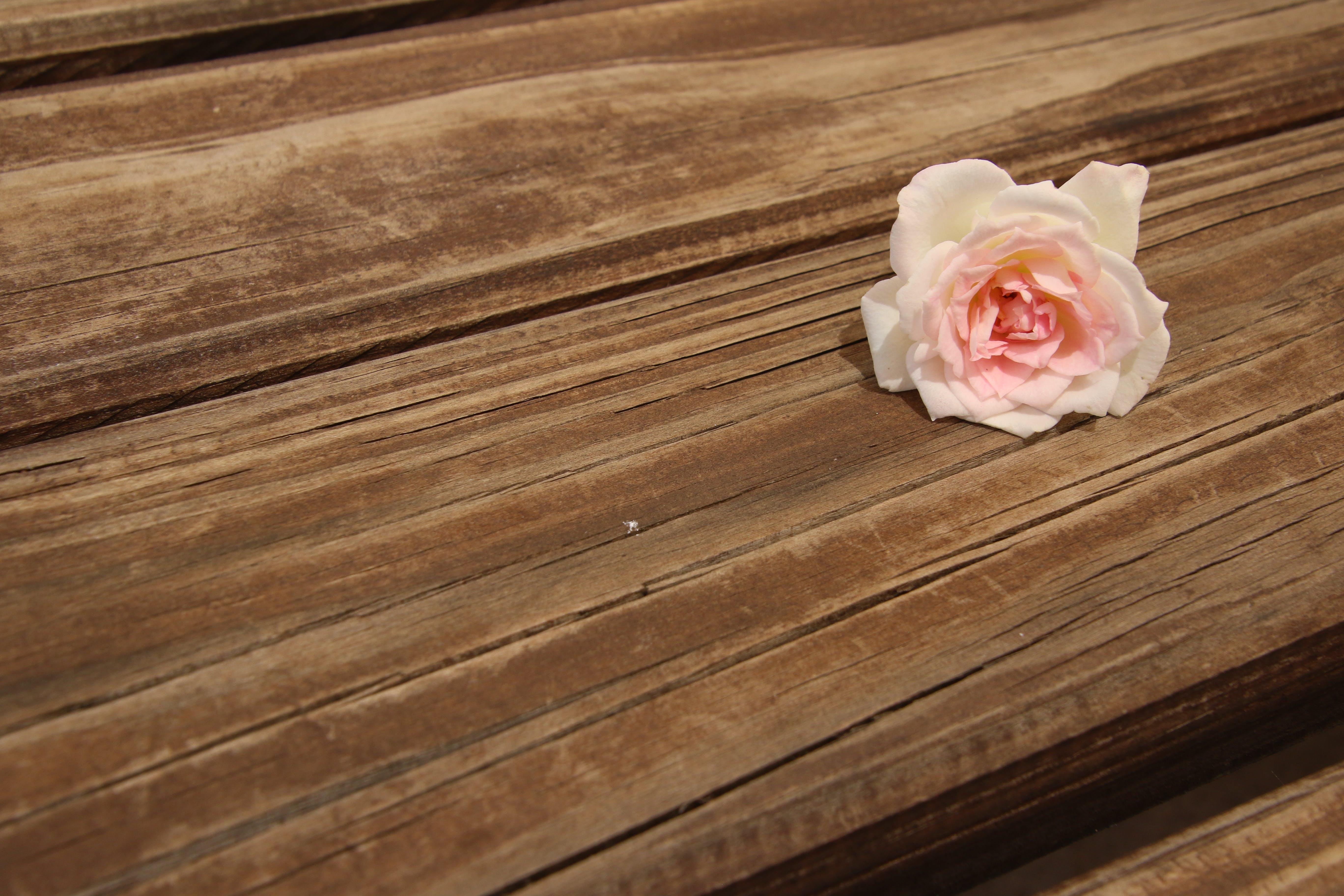 Free stock photo of wood, nature, texture, garden