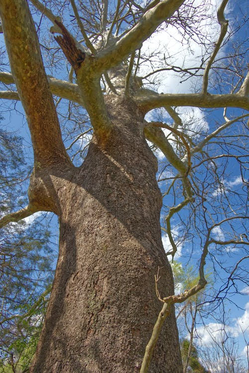 Free stock photo of bark, blue sky, branches