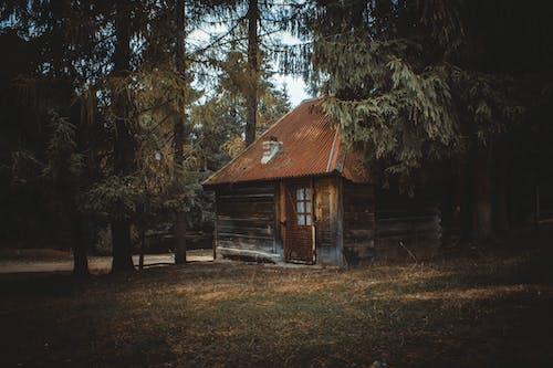 Foto d'estoc gratuïta de abandonat, arbres, arquitectura, bosc