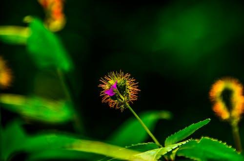 Fotos de stock gratuitas de amor, Arte, flor, madre naturaleza