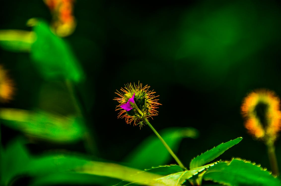 Free stock photo of art, flower, love