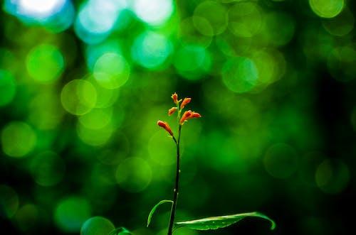 Kostnadsfri bild av blommor, delikat, flora, fokus