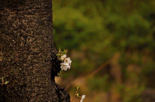 Fotos de stock gratuitas de amor, árbol, flor, fondo de pantalla HD