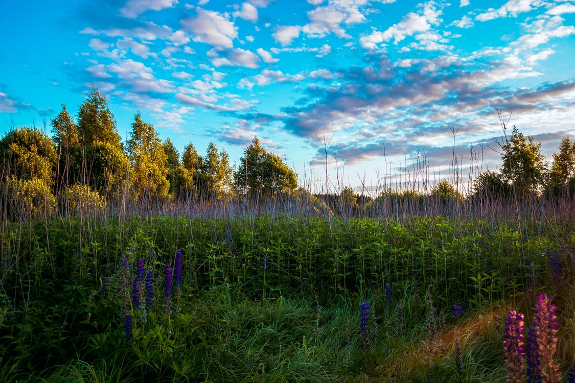 Tall Trees and Grasses