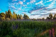 wood, dawn, landscape