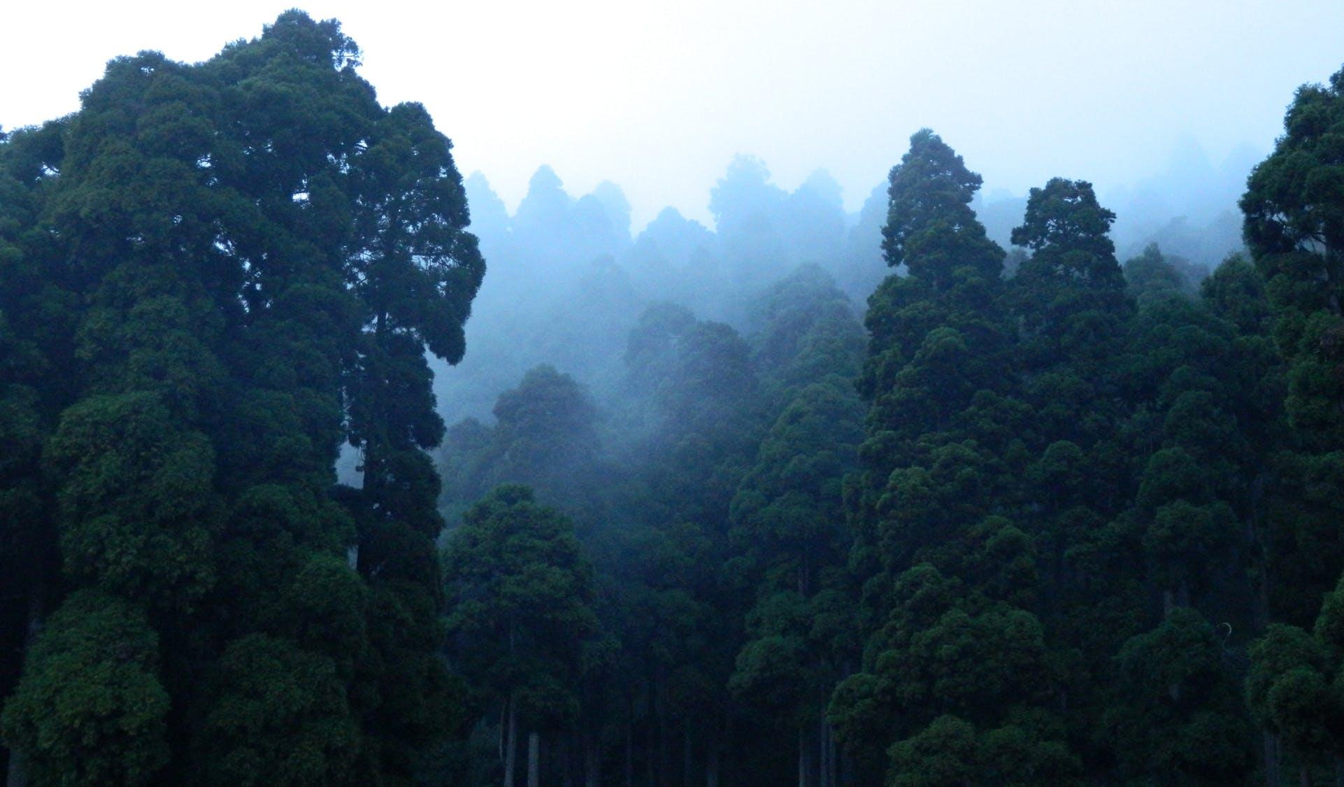 Kostenloses Stock Foto zu landschaft, natur, wolken, wald