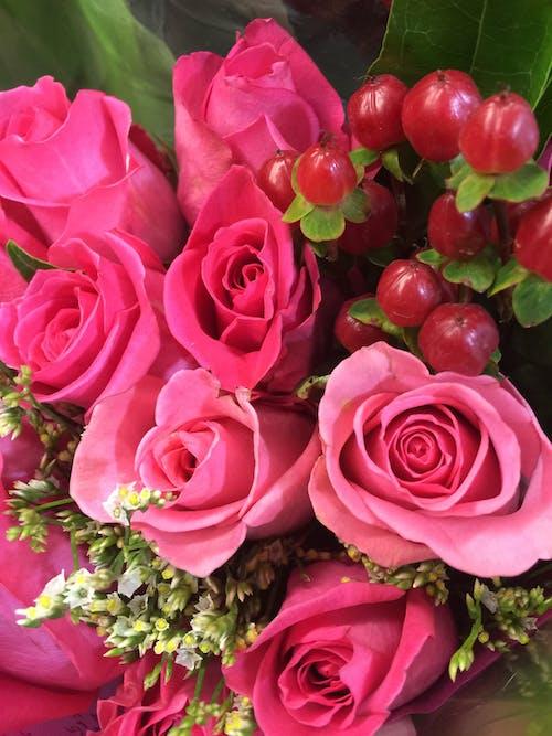 Darmowe zdjęcie z galerii z flora, kwiaty, róże