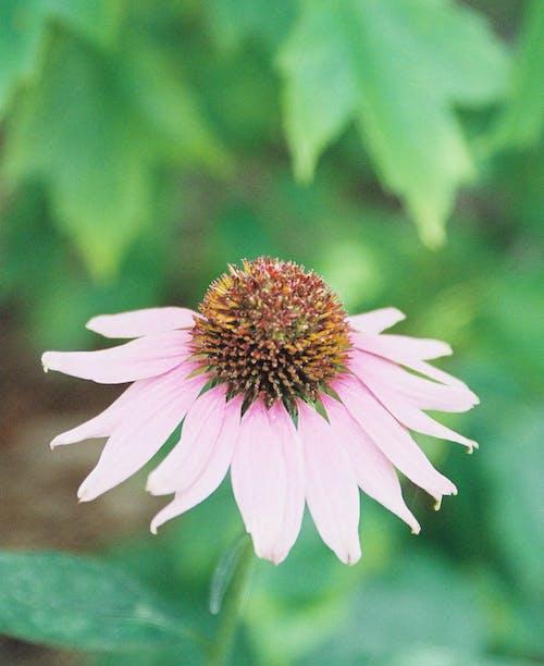 Foto stok gratis bunga-bunga indah, bunga-bunga merah muda