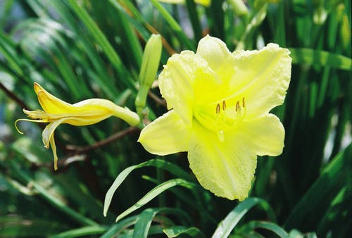 Foto stok gratis bunga kuning, bunga-bunga indah