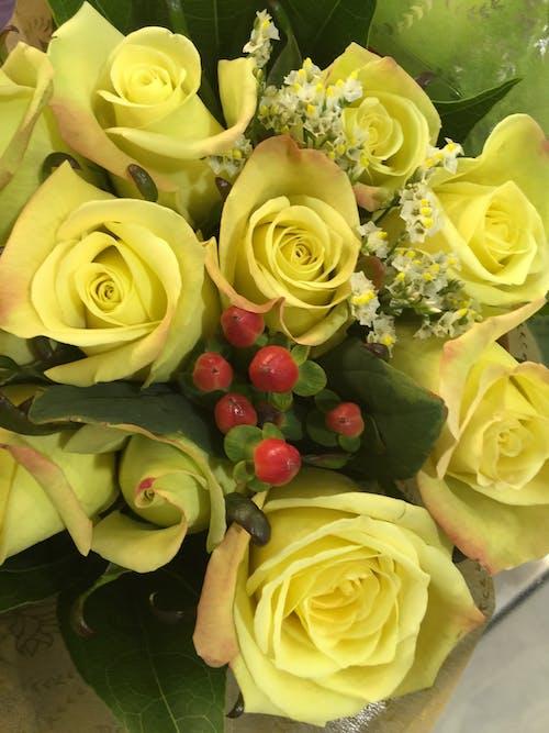 バラ, フラワーズ, 黄色い花の無料の写真素材