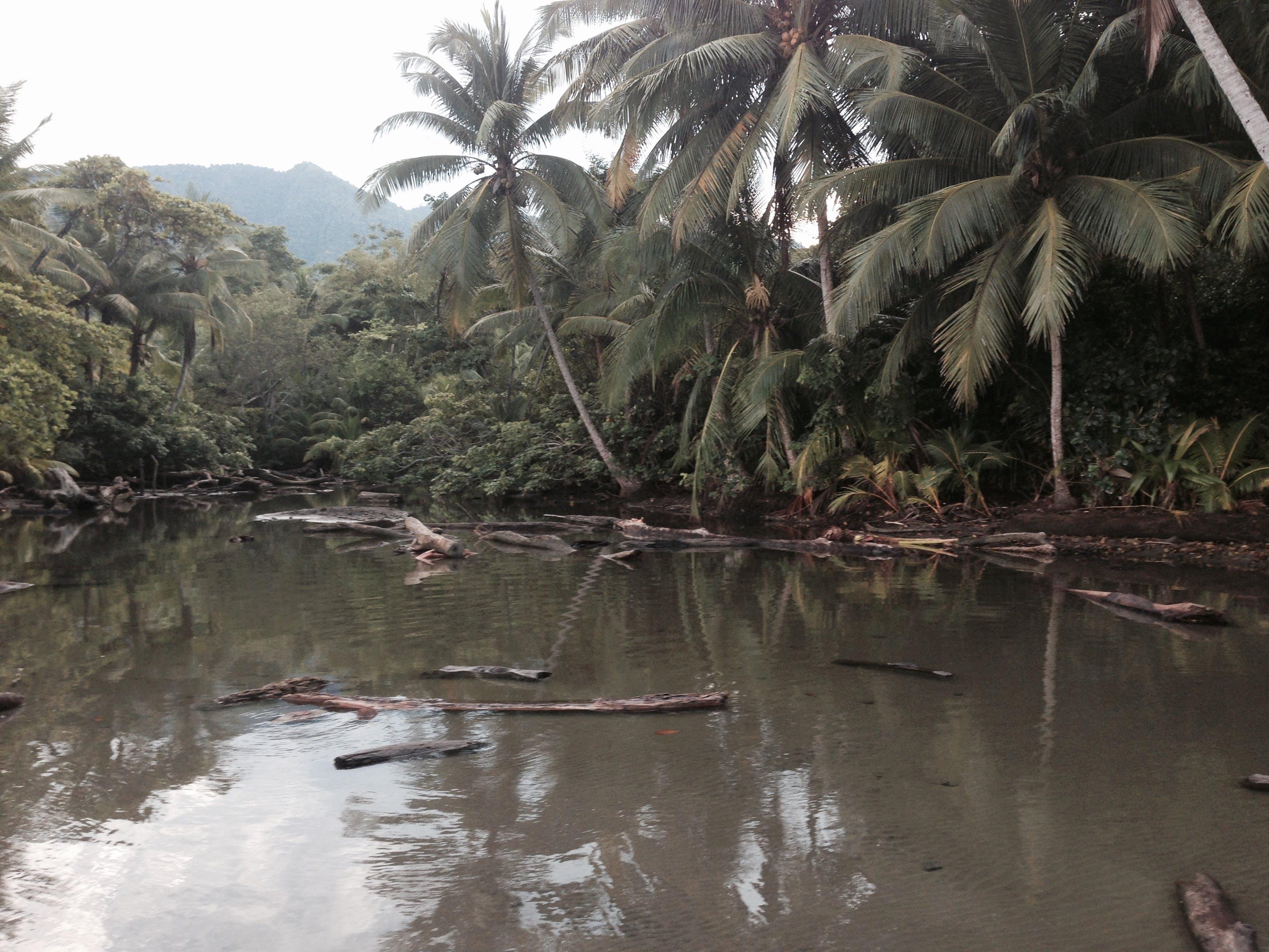 Free stock photo of Costa Rica, jungle, river