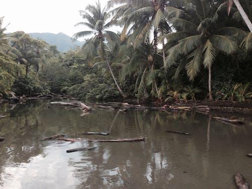 コスタリカ, ジャングルの無料の写真素材