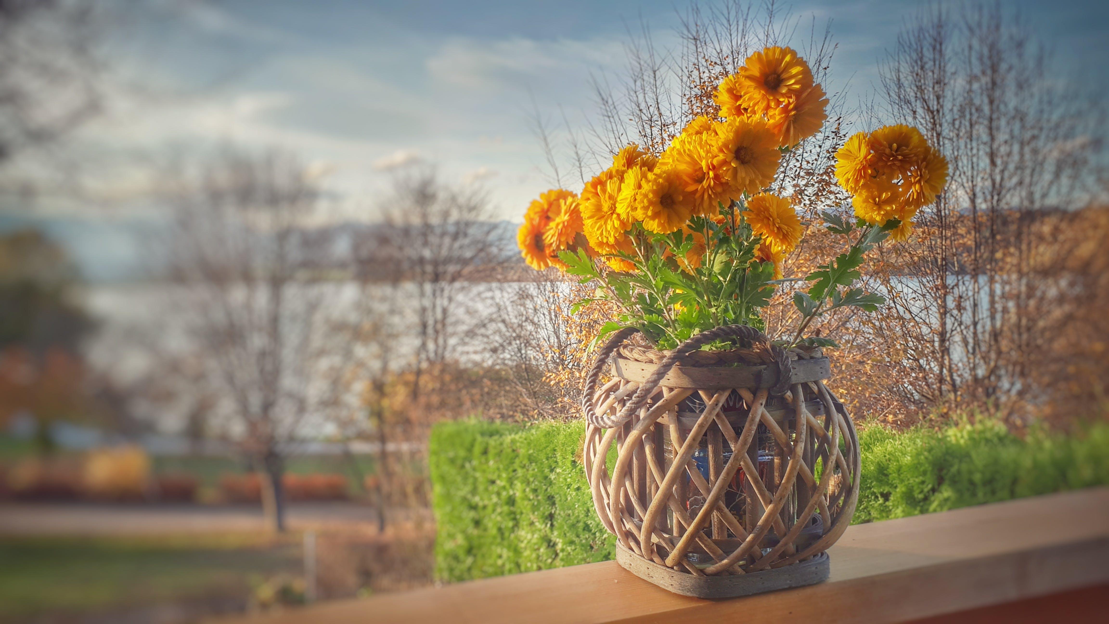 Orange Clustered Petaled Flowers in Brown Wicker Pot on Brown Wooden Plank
