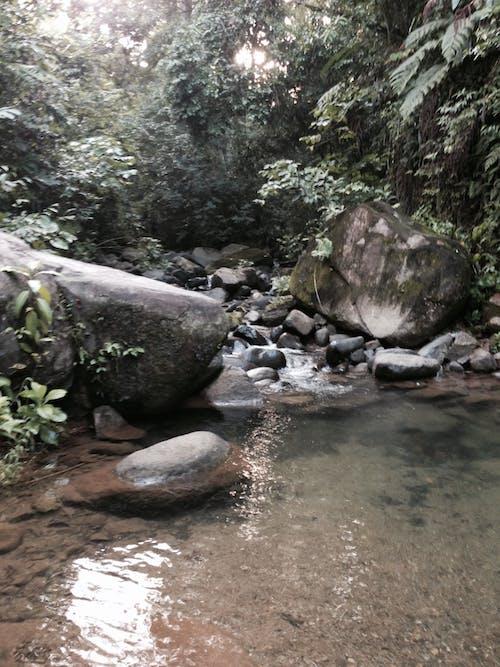 コスタリカ, ジャングル, ビーチの無料の写真素材