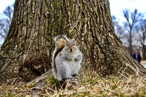 White and Gray Squirrel on Brown Tree Trunk