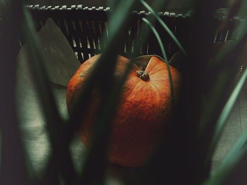 南瓜, 季節, 孤立的, 感恩節 的 免費圖庫相片