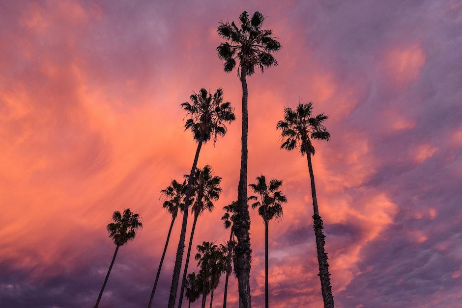 clouds, nature, palms