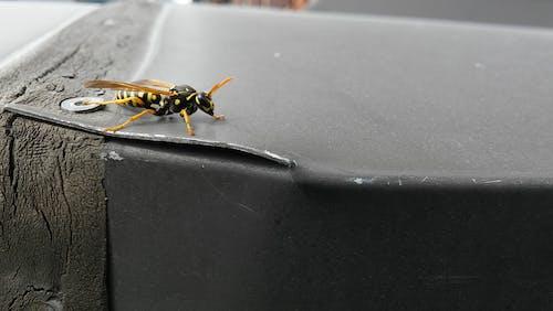 Foto d'estoc gratuïta de #wasp #nature #smartphone #insect #insects