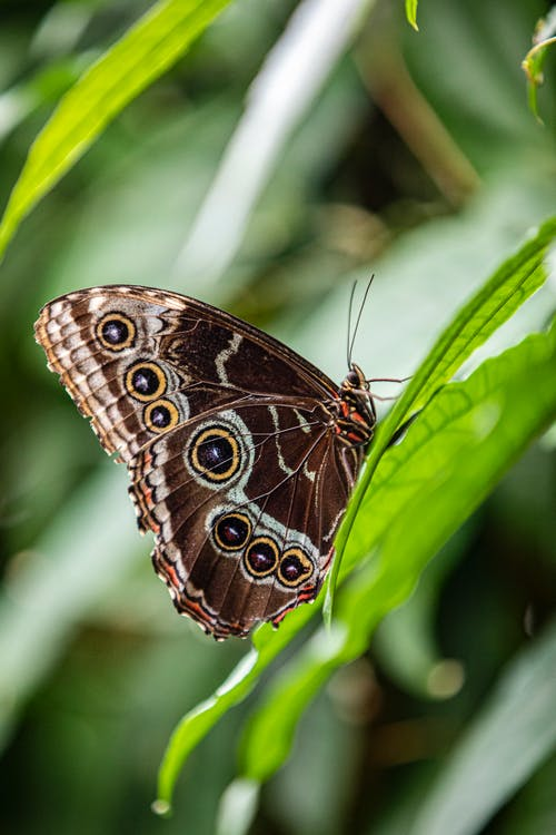 Brown Butterfly perched on Leaves