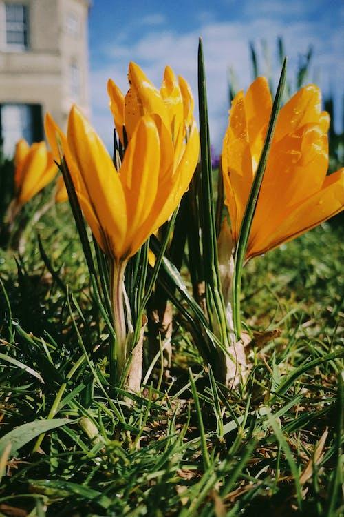 Бесплатное стоковое фото с максросъемка, осень, природа