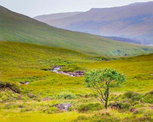 Imagine de stoc gratuită din arbore, aventură, câmp