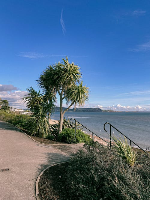 Green Palm Tree Near Sea