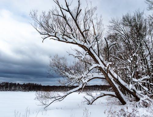冬, 冬の美しさ, 自然の美しさの無料の写真素材