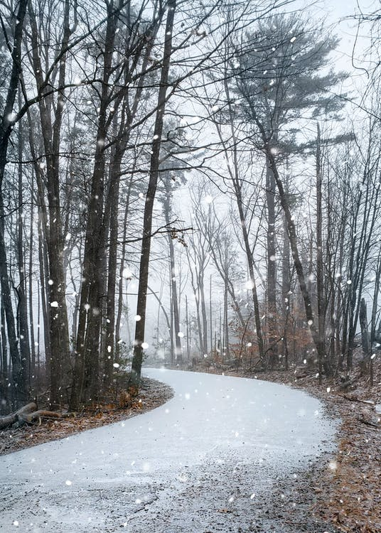 Snow Covered Road Between Bare Trees